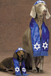 Rabbi Dogs