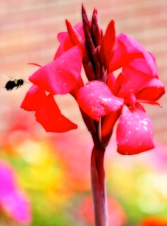 Weird Red and Bee