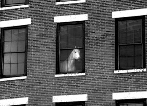 horse-in-window-bw