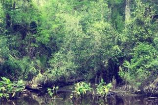 EvergladesBoardwalkGatorVintageSmooth